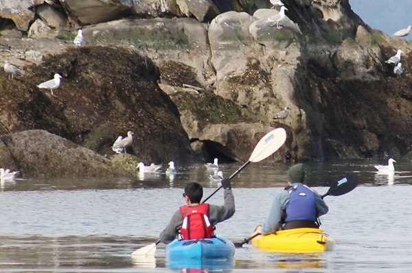 kayakers in gulf islands waters