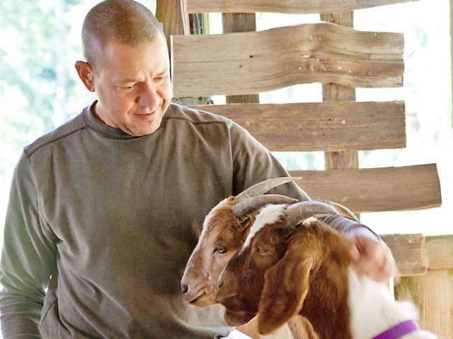 goats at Salt Spring cheesemaker